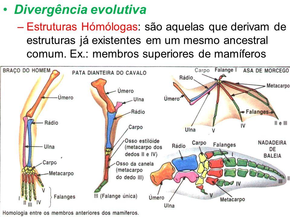 Divergência evolutiva