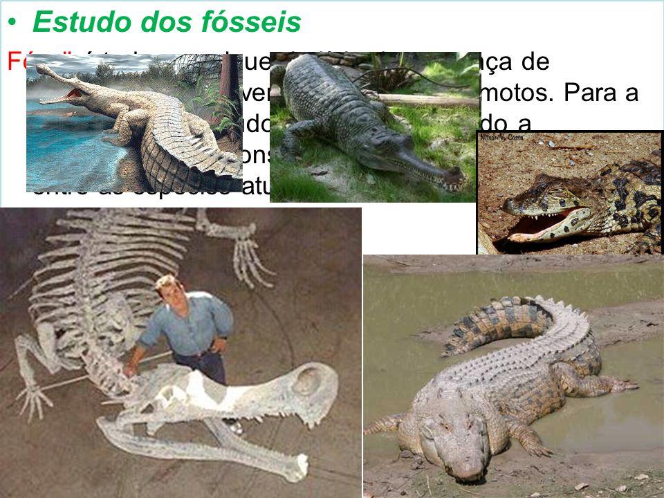Estudo dos fósseis