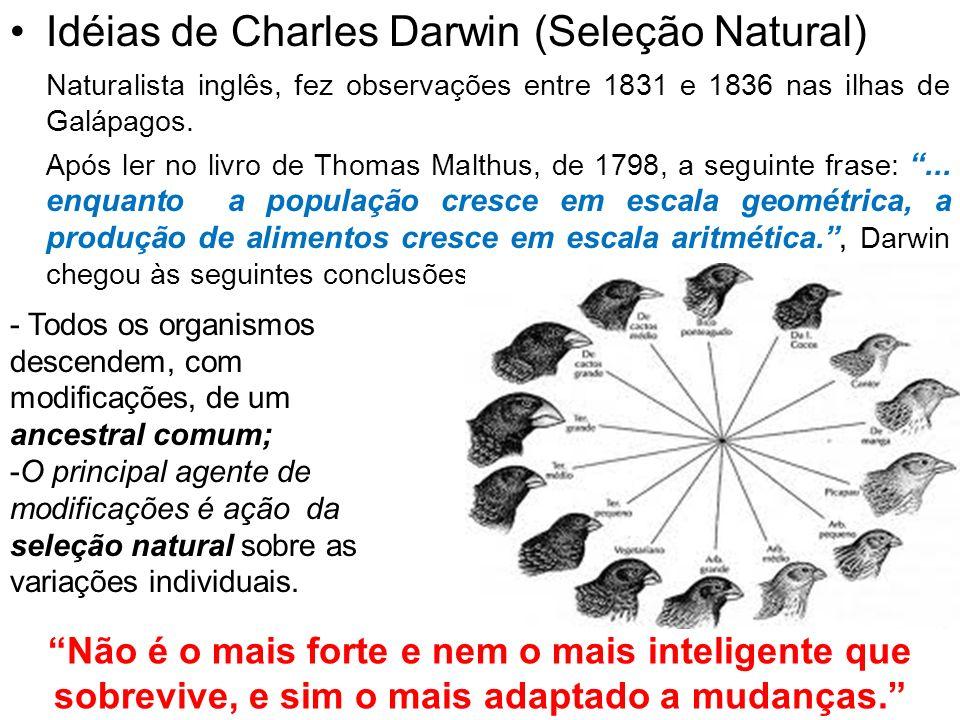 Idéias de Charles Darwin (Seleção Natural)