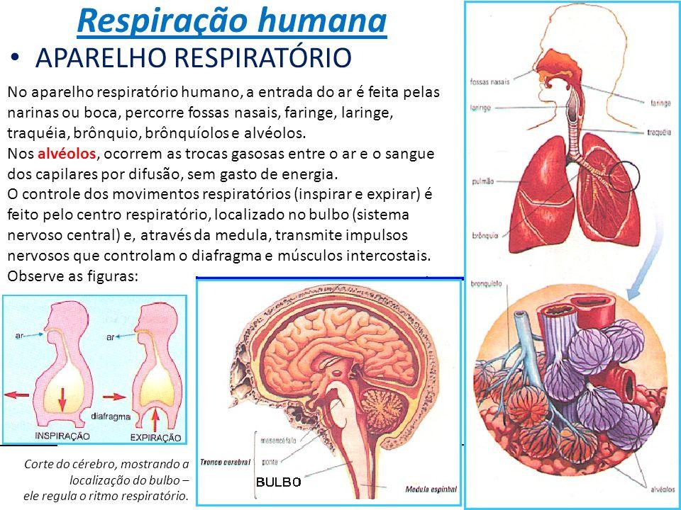 Respiração humana APARELHO RESPIRATÓRIO