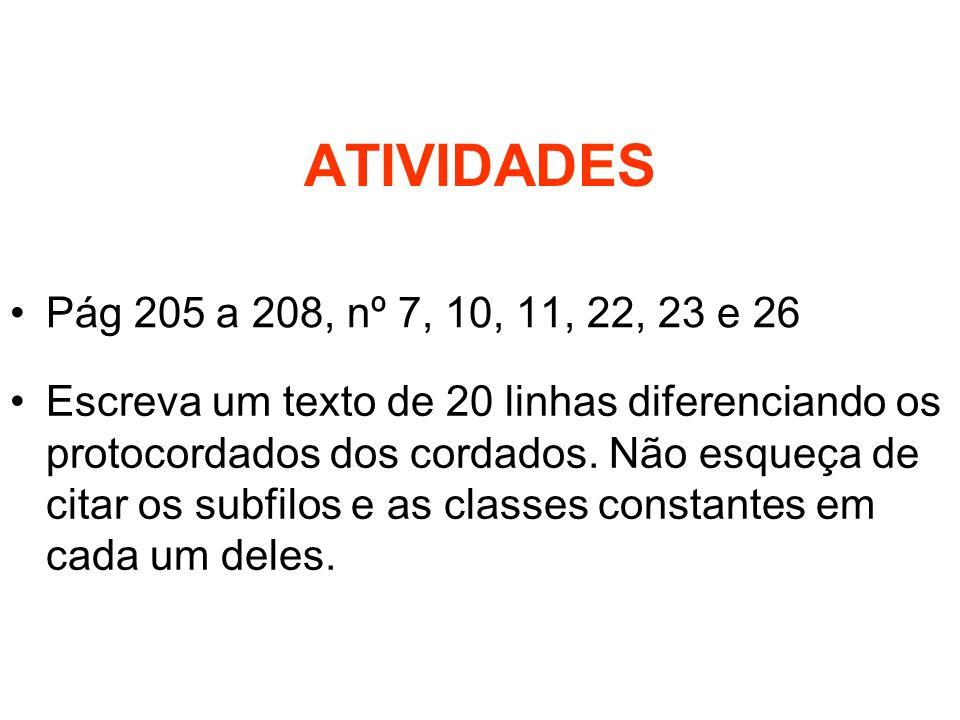 ATIVIDADES Pág 205 a 208, nº 7, 10, 11, 22, 23 e 26.