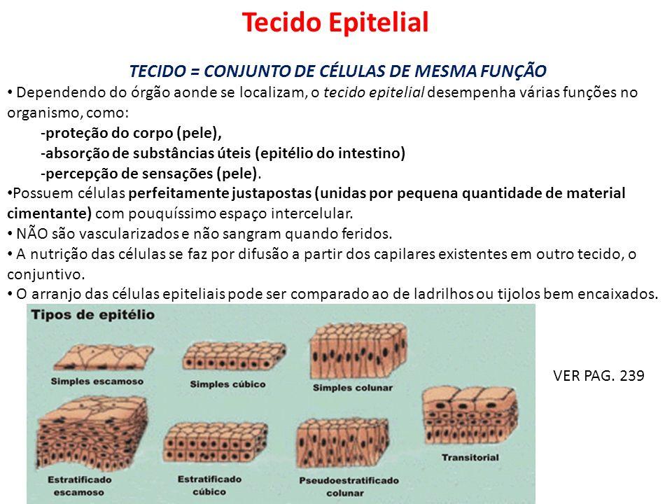 TECIDO = CONJUNTO DE CÉLULAS DE MESMA FUNÇÃO