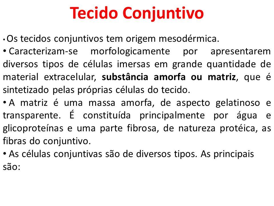Tecido Conjuntivo Os tecidos conjuntivos tem origem mesodérmica.