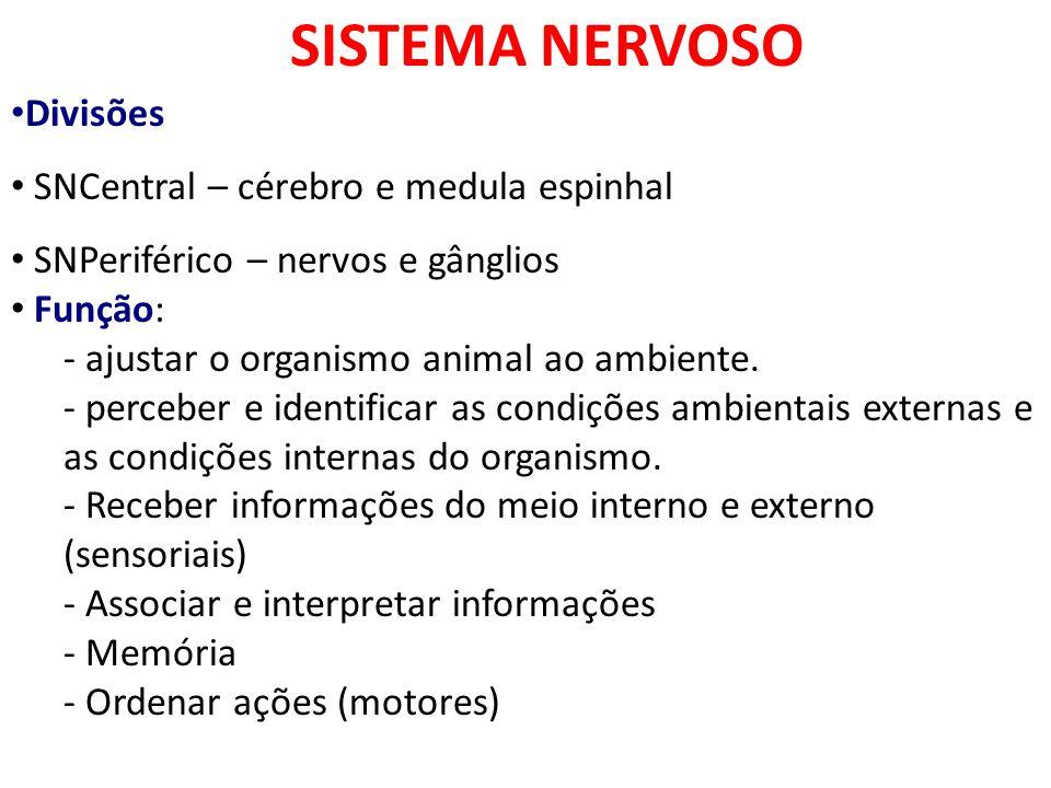SISTEMA NERVOSO Divisões SNCentral – cérebro e medula espinhal