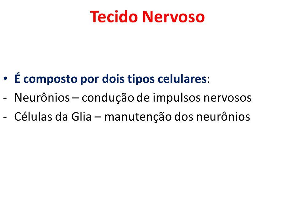 Tecido Nervoso É composto por dois tipos celulares: