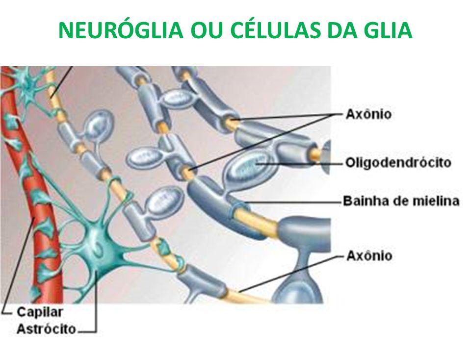 NEURÓGLIA OU CÉLULAS DA GLIA