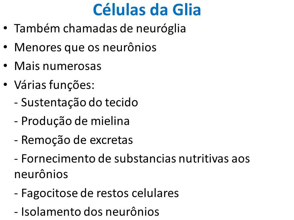 Células da Glia Também chamadas de neuróglia Menores que os neurônios