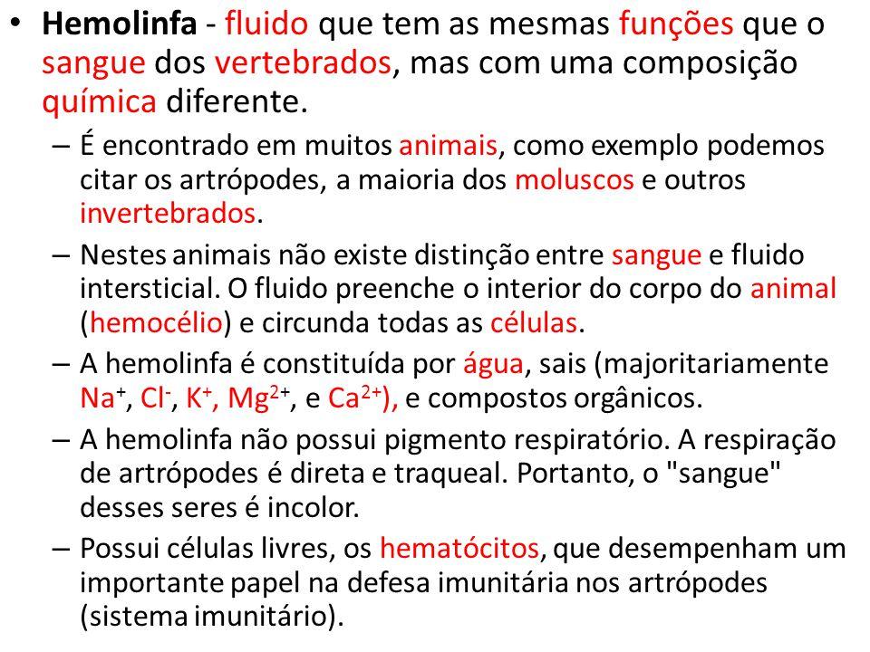 Hemolinfa - fluido que tem as mesmas funções que o sangue dos vertebrados, mas com uma composição química diferente.