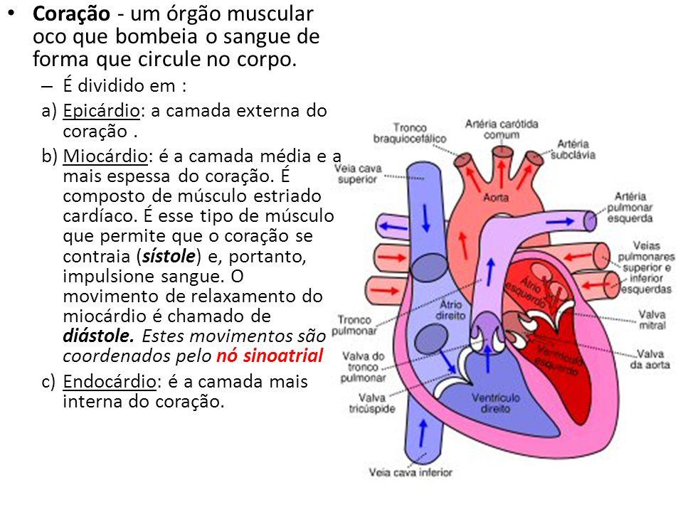 Coração - um órgão muscular oco que bombeia o sangue de forma que circule no corpo.