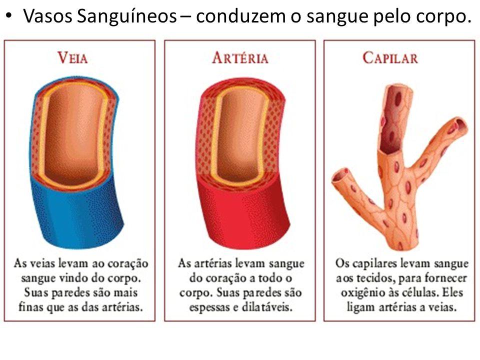 Vasos Sanguíneos – conduzem o sangue pelo corpo.