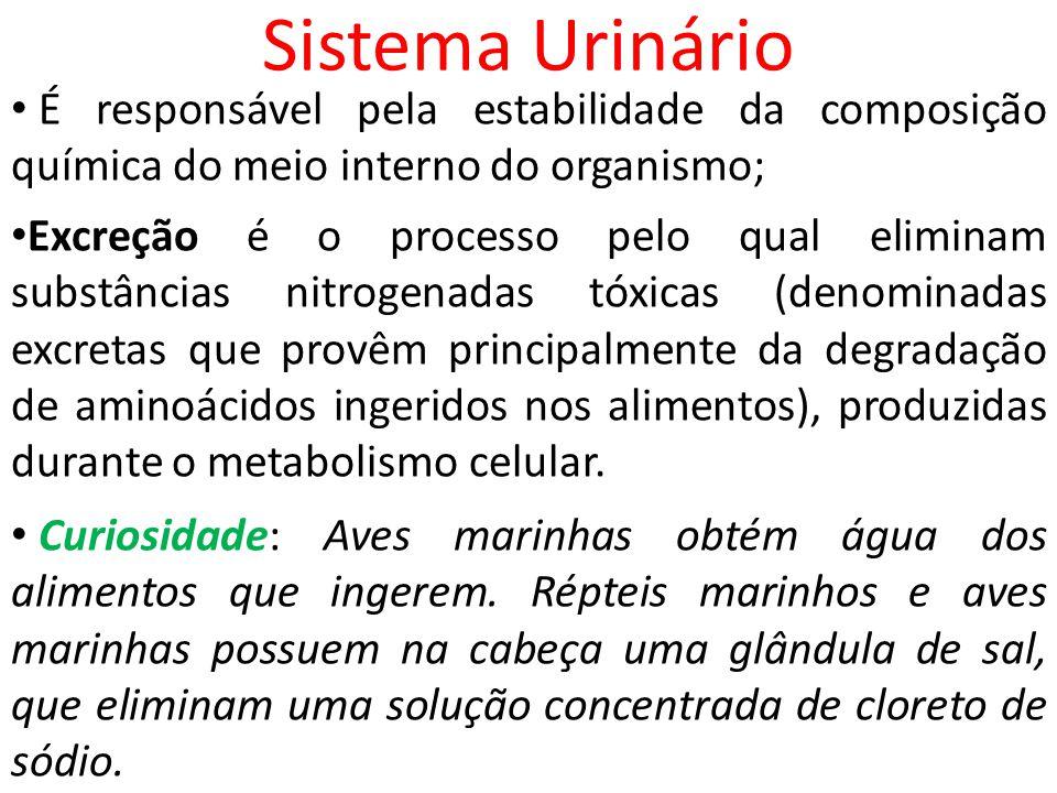 Sistema Urinário É responsável pela estabilidade da composição química do meio interno do organismo;