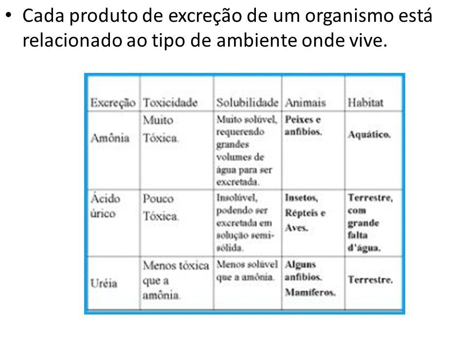Cada produto de excreção de um organismo está relacionado ao tipo de ambiente onde vive.