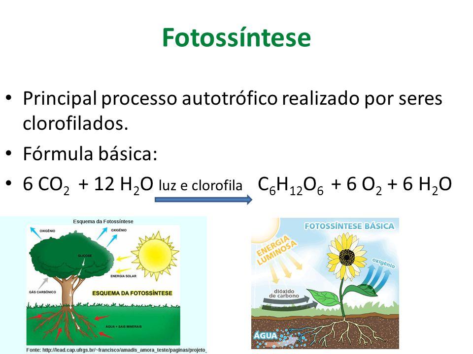 Fotossíntese Principal processo autotrófico realizado por seres clorofilados. Fórmula básica: