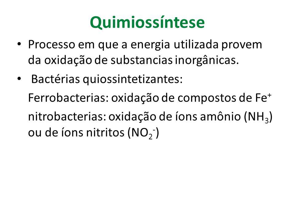 Quimiossíntese Processo em que a energia utilizada provem da oxidação de substancias inorgânicas. Bactérias quiossintetizantes: