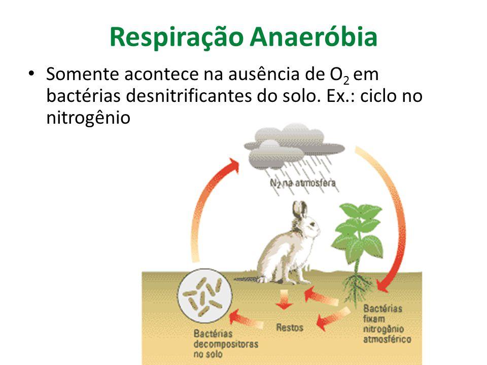 Respiração Anaeróbia Somente acontece na ausência de O2 em bactérias desnitrificantes do solo.