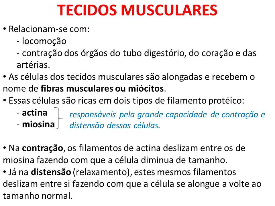 TECIDOS MUSCULARES Relacionam-se com: locomoção