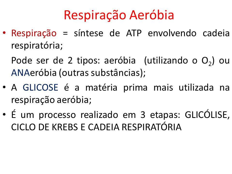 Respiração AeróbiaRespiração = síntese de ATP envolvendo cadeia respiratória;