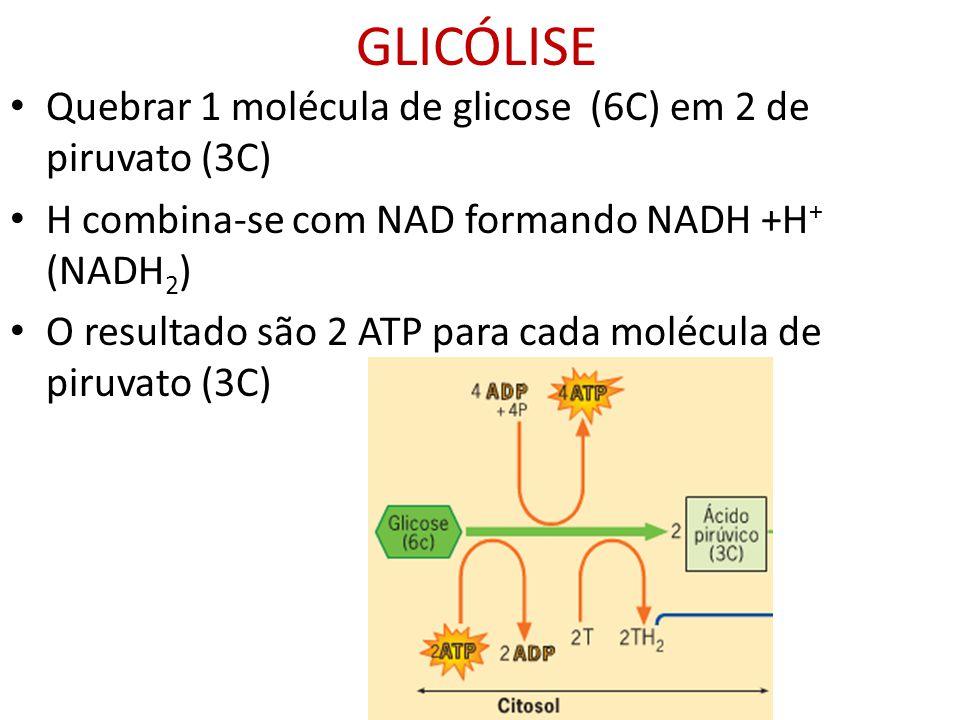 GLICÓLISE Quebrar 1 molécula de glicose (6C) em 2 de piruvato (3C)