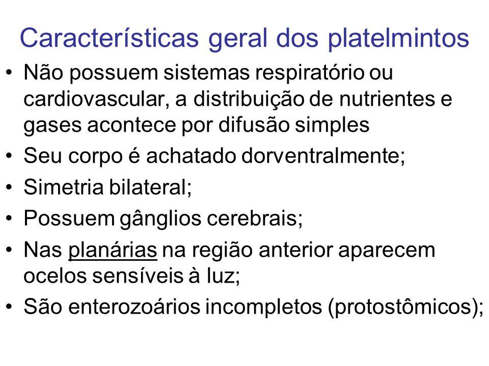 Características geral dos platelmintos