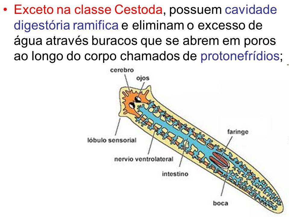 Exceto na classe Cestoda, possuem cavidade digestória ramifica e eliminam o excesso de água através buracos que se abrem em poros ao longo do corpo chamados de protonefrídios;