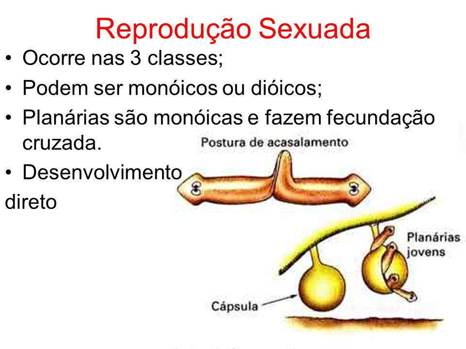 Reprodução Sexuada Ocorre nas 3 classes;