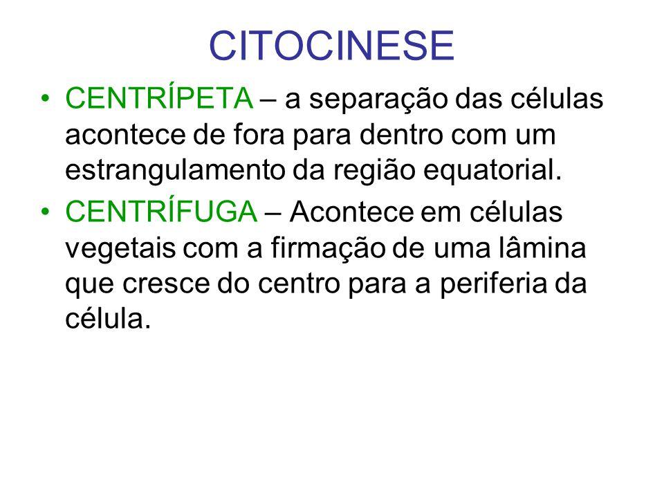CITOCINESE CENTRÍPETA – a separação das células acontece de fora para dentro com um estrangulamento da região equatorial.