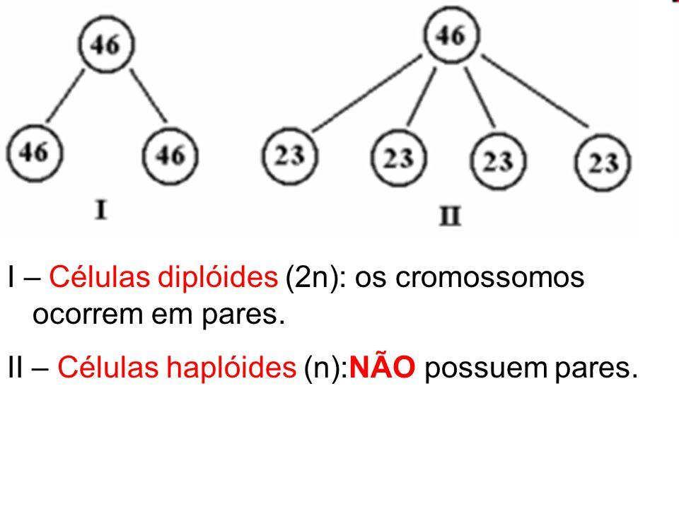 I – Células diplóides (2n): os cromossomos ocorrem em pares.