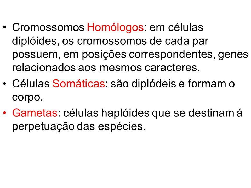 Cromossomos Homólogos: em células diplóides, os cromossomos de cada par possuem, em posições correspondentes, genes relacionados aos mesmos caracteres.