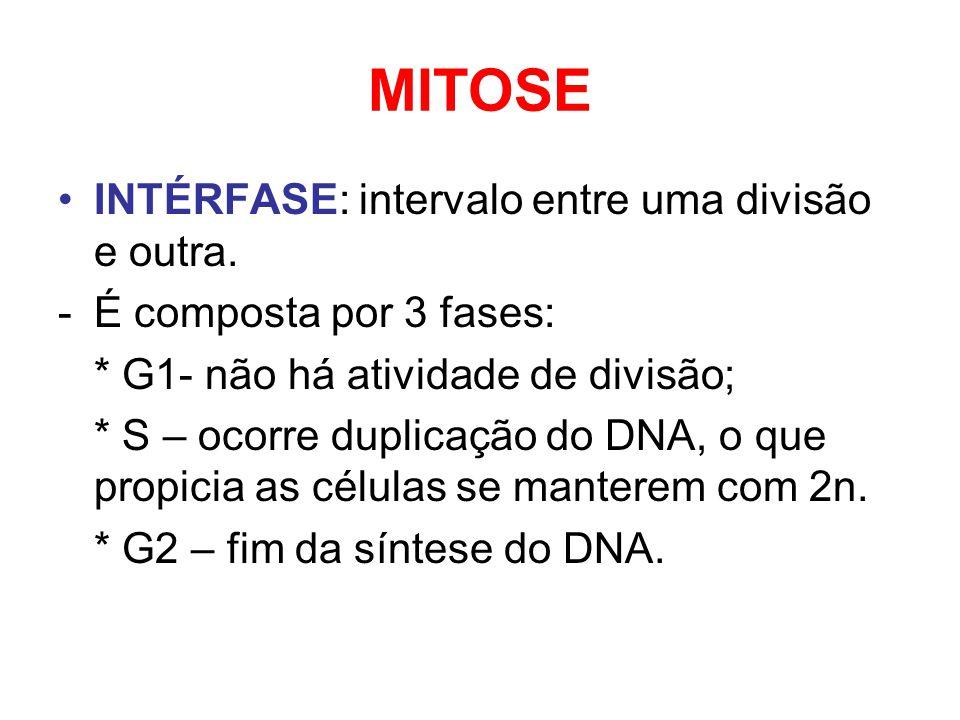 MITOSE INTÉRFASE: intervalo entre uma divisão e outra.