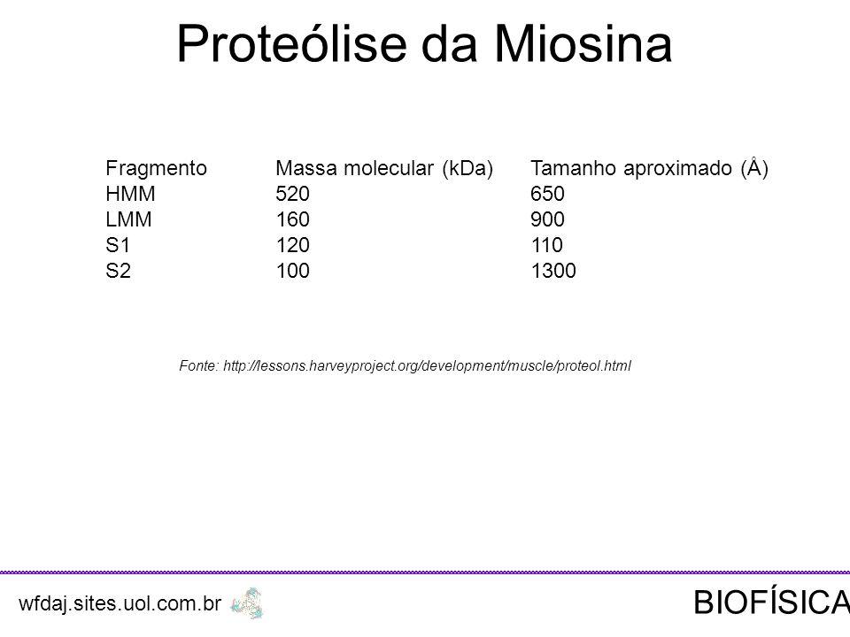 Proteólise da Miosina BIOFÍSICA