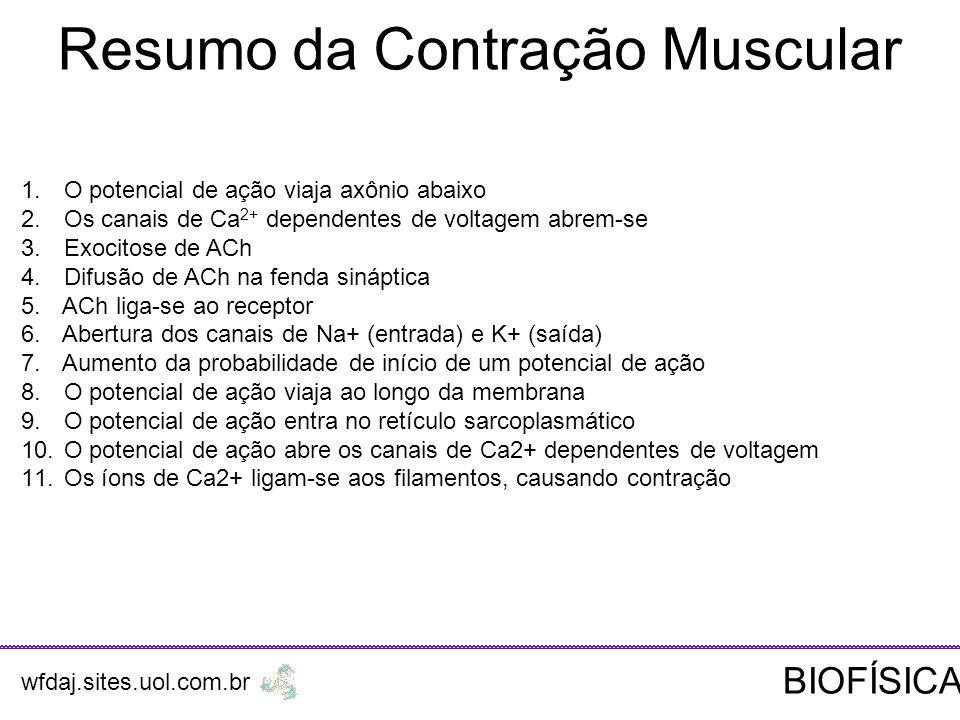 Resumo da Contração Muscular