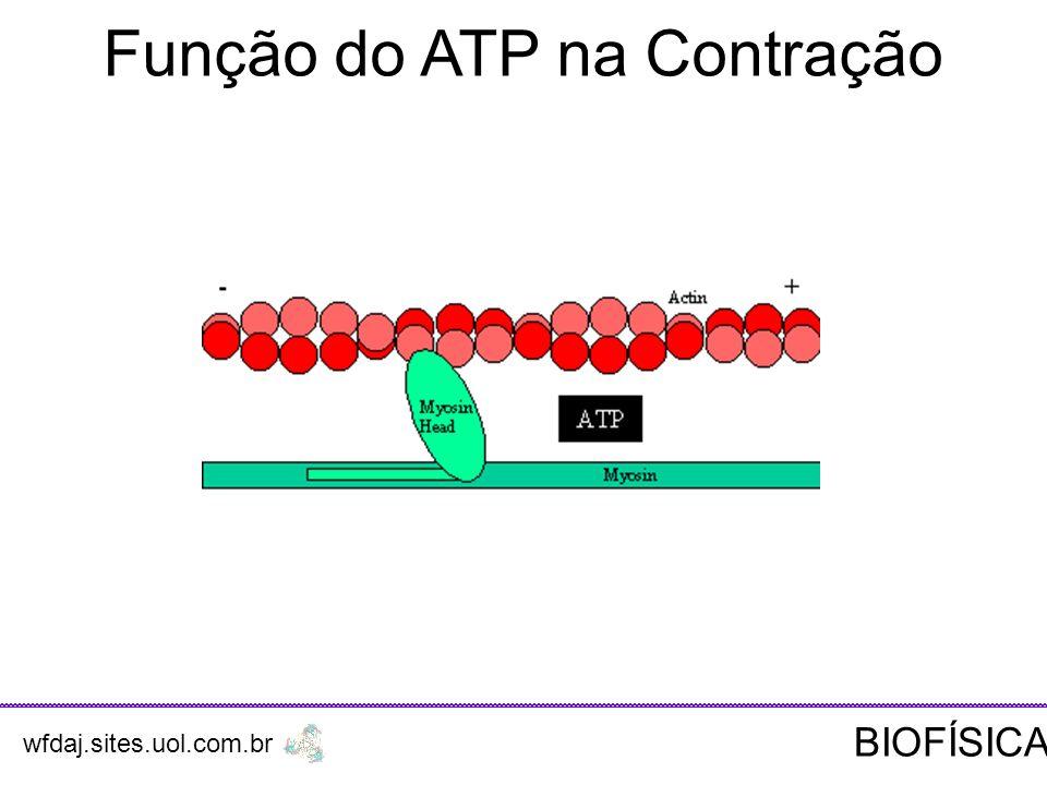 Função do ATP na Contração