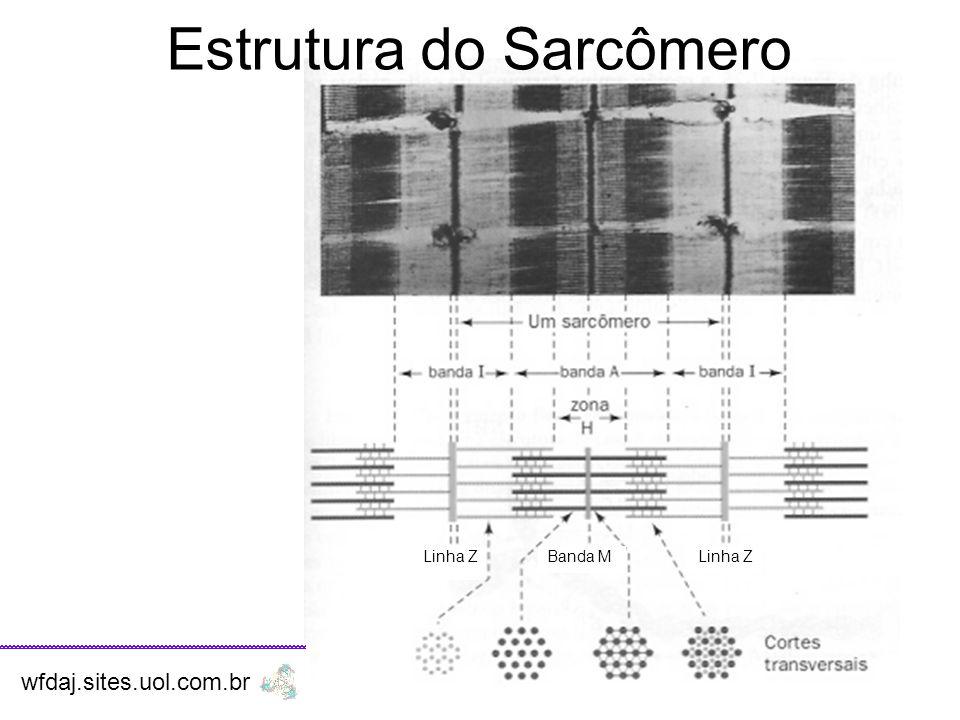 Estrutura do Sarcômero
