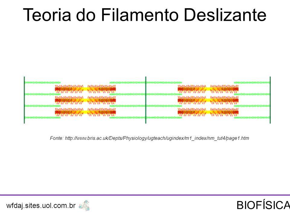 Teoria do Filamento Deslizante