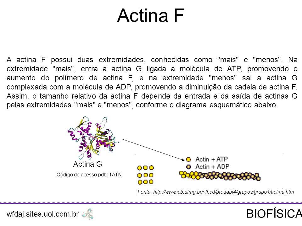 Actina F