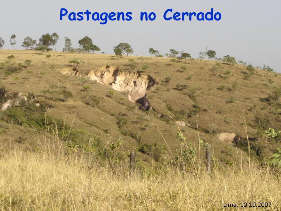 Pastagens no Cerrado Lima, 10.10.2007