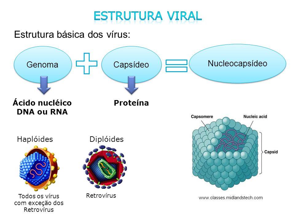 Todos os vírus com exceção dos Retrovírus
