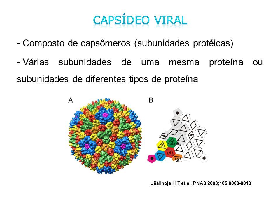 Capsídeo viral Composto de capsômeros (subunidades protéicas)