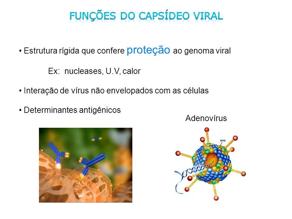 Funções do capsídeo viral