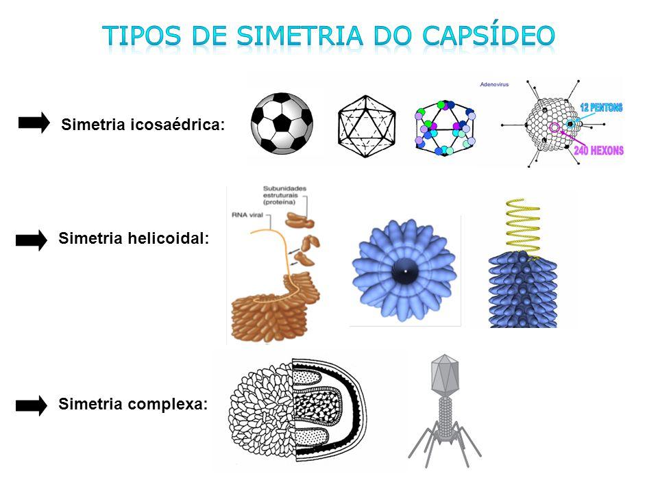 Tipos de simetria do capsídeo