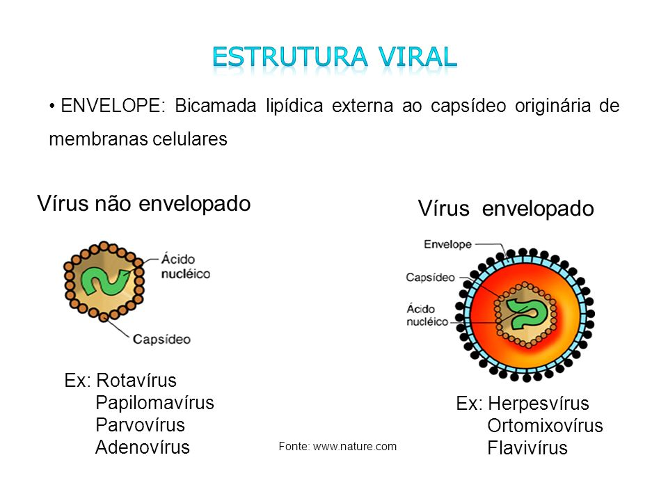 Estrutura Viral Vírus não envelopado Vírus envelopado
