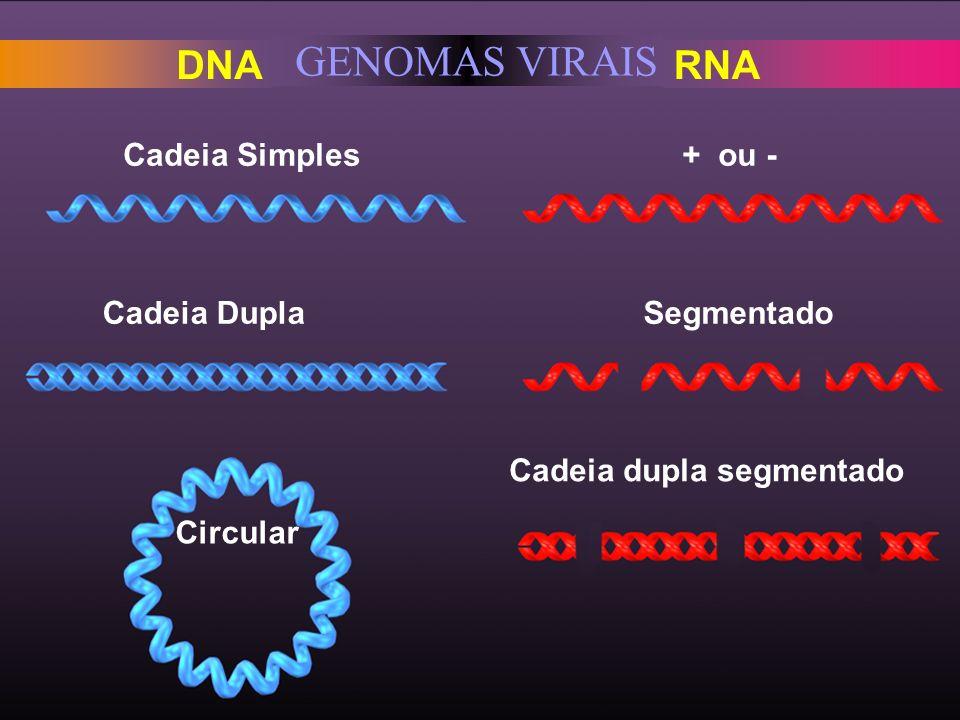 GENOMAS VIRAIS DNA RNA Cadeia Simples + ou - Cadeia Dupla Segmentado