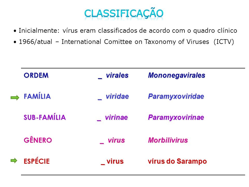 classificação ORDEM _ virales Mononegavirales FAMÍLIA _ viridae