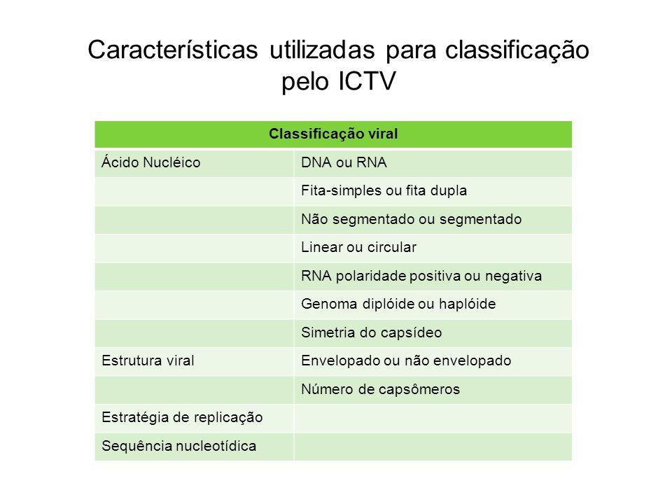 Características utilizadas para classificação pelo ICTV