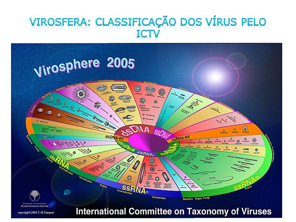 Virosfera: classificação dos vírus pelo ICTV