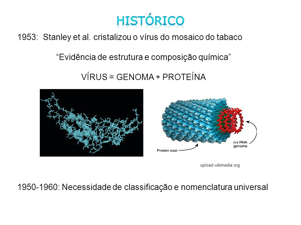 Histórico1953: Stanley et al. cristalizou o vírus do mosaico do tabaco. Evidência de estrutura e composição química