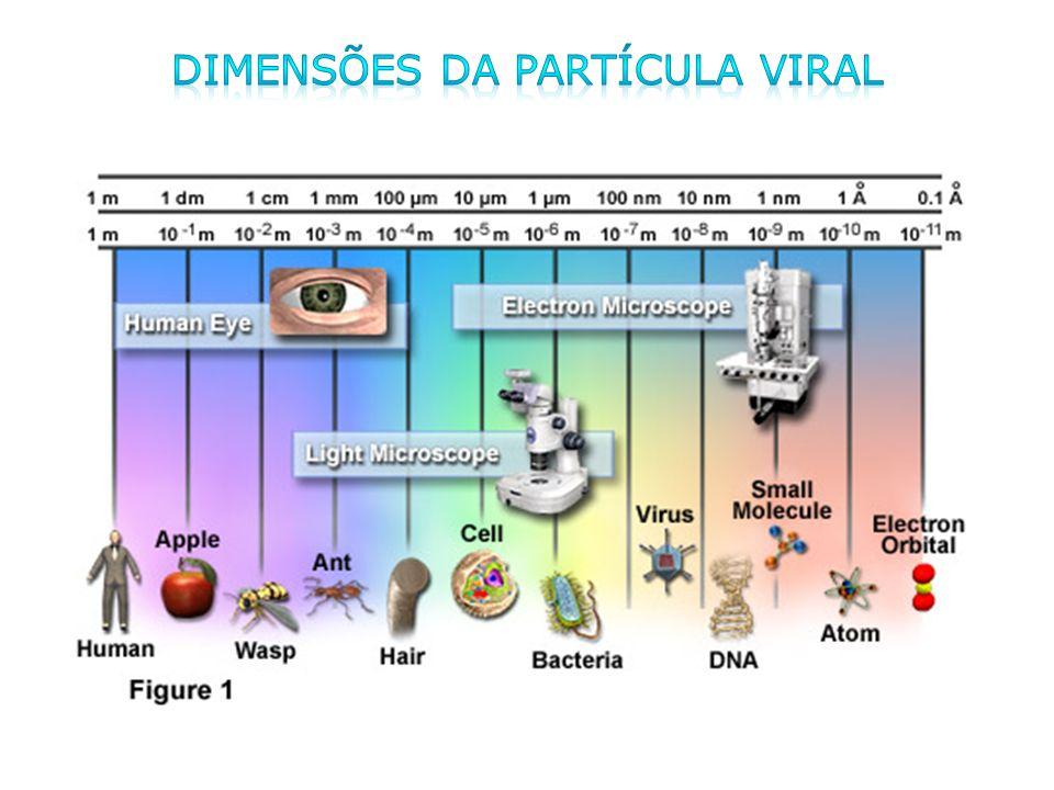 DIMENSÕES DA PARTÍCULA VIRAL
