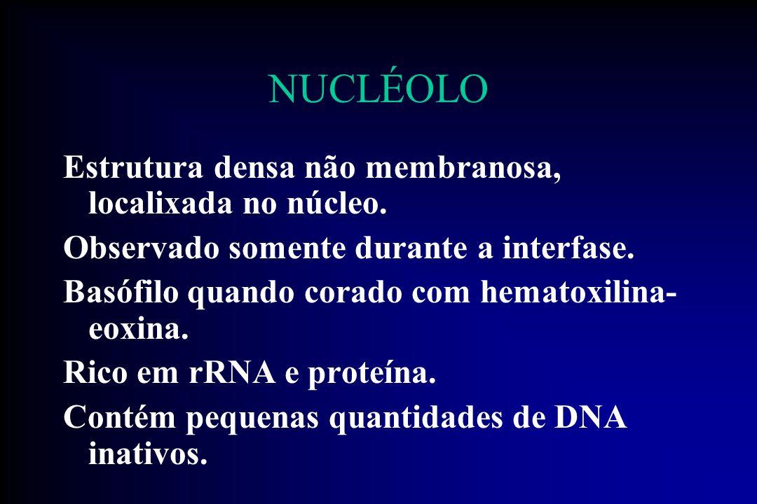 NUCLÉOLO Estrutura densa não membranosa, localixada no núcleo.