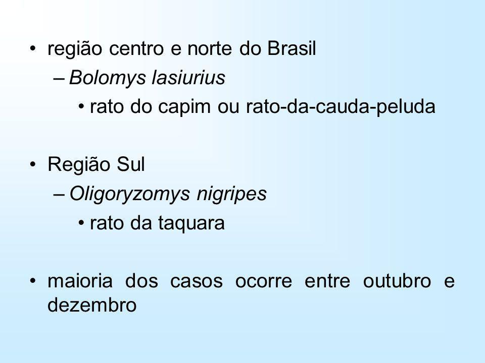região centro e norte do Brasil