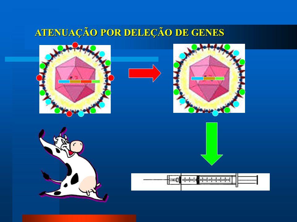 ATENUAÇÃO POR DELEÇÃO DE GENES